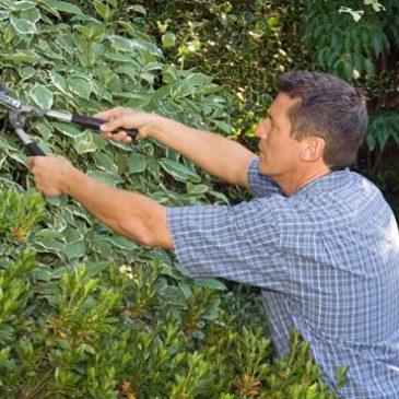 Pensez à l'entretien de votre jardin